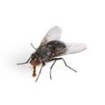 image of a fly in Cape Town