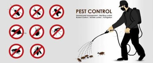 Pest control cape town & Fumigation services