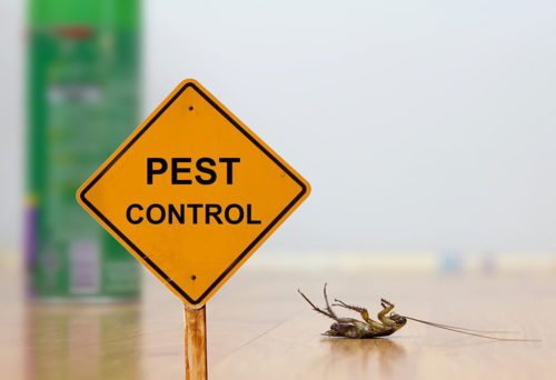 reliable pest control cape town