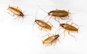 cockroach fumigation service in Cape Town