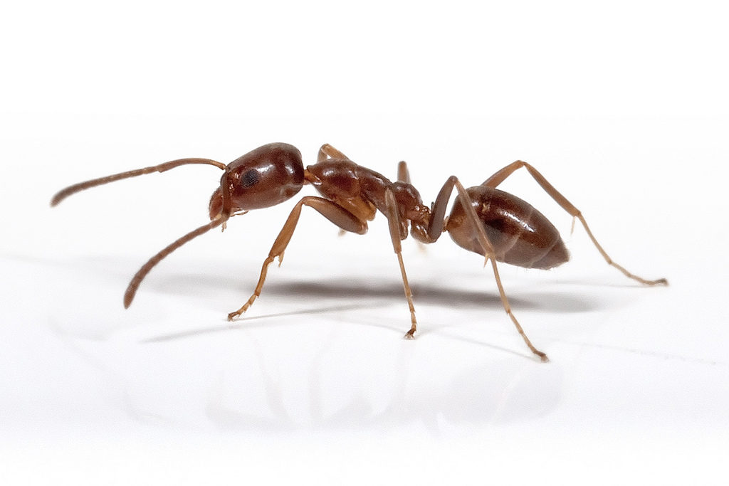 Ants Control Cape Town