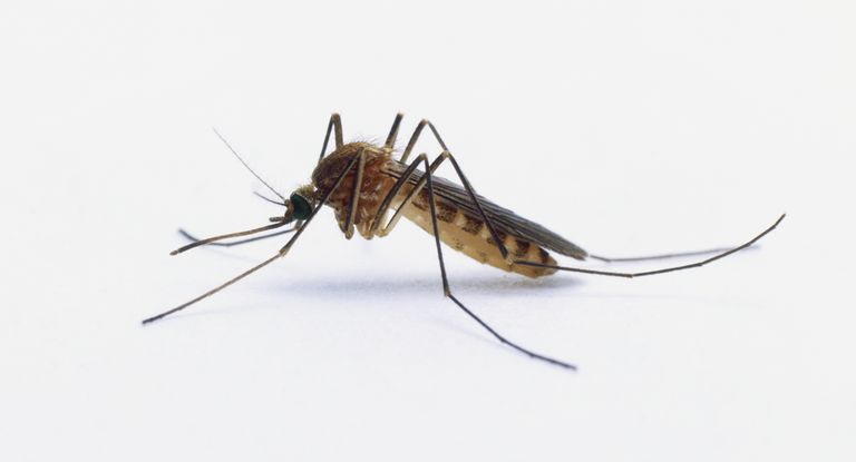 Mosquito pest control in Cape Town